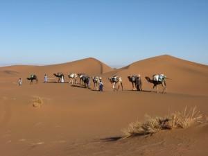 GFK-Reise in die Wüste Sahara - Wüstentrekking mit Tuaregs und Dromedaren / Esther Gerdts und AssistenInnen @ Wüste Sahara | Mhamid | Souss-Massa-Draâ | Marokko